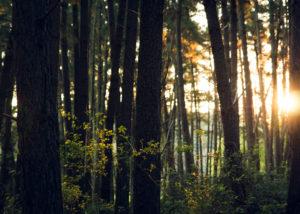 Organisation d'un seminaire séminaire à la campagne pour entreprise : Séminaire en forêt de Fontainebleau - image 1